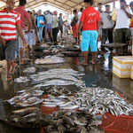 Fischmarkt Trincomalee, Sri Lanka