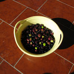eigene Oliven