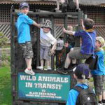 Campsie Beavers enjoy the animals at the Great Western trip to Blairdrummond Safari Park