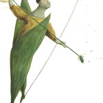 3ª edizione ◊ Festival Brocante - illustrazioni Sara Colautti