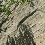 Cet essaim se trouve accroché à la falaise à environ 14 m du sol