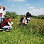 Untersuchung einer Orchideenwiese an der Warnow