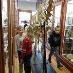 Auf der Suche nach den Frühlingsboten in der Zoologischen Sammlung der Uni Rostock