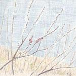 湯河原梅林(2008/2, colored pencil)