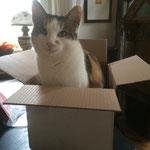 'Glückskatze' Minka  hat hier ein schönes Zuhause gefunden