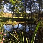 Ein Blick vom Gartenteich aufs Feld in Richtung Klecker Wald
