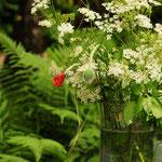Selbst der Girsch ist in seiner Blütezeit sehr schön