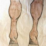 Zampe di mammifero. Camilla 2014/2015
