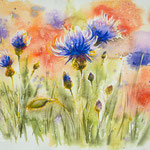 Cornflowers and poppies 34x46 available