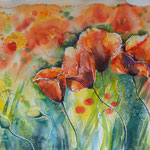 Poppies 34x46 available