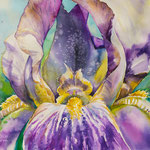 Iris I 36x48  available