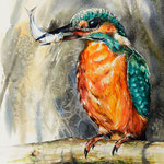 Kingfisher 56x38