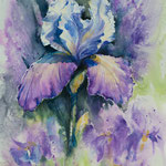 Iris II  34x46 available