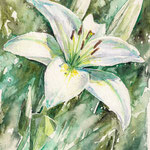 Lily 17x24
