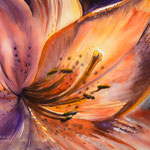 Lily 36x48  available