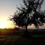 Sonnenaufgang in Moosing
