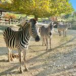 Zoo in Gossau (CH)