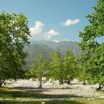 Habitat van wormslang, reuzensmaragdhagedis en Egeïsche muurhagedis.