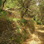 Habitat van Anatolische muurhagedis, gouden skink, hardoen en gewone pad.
