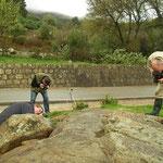 Vuursalamander fotografie