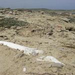 Menselijke resten uit Byzantijnse tijden zijn overal te vinden op het eiland.