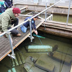 After a visit to the breeding facility we could feed the Giant Salamanders with fish on sticks. © Laura Tiemann