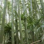 Sagano Bamboo Forest © Laura Tiemann