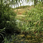 Habitat van meerkikker