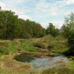 Habitat van bovenstaande soorten.