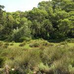 Barranc de Algendar