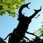 vliegende hert (Lucanus cervus) mannetje