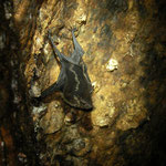 Bats find shelter between tree roots.