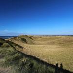 Ocean of grass...