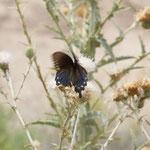 Butterfly ID???