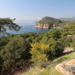 Çavuşköy peninsula, habitat of Spur/thighed tortoise, Oertzen's Rock Lizard and Pamphylian Green Lizard. © Laura Tiemann