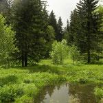 Habitat of Montandon's Newt