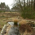 Habitat van kleine watersalamander en Italiaanse kamsalamander op de Veluwe.