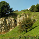 Habitat van muurhagedis, levendbarende hagedis, vroedmeesterpad en veel andere soorten.