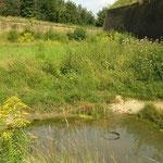 Habitat van vroedmeesterpad, muurhagedis en hazelworm.