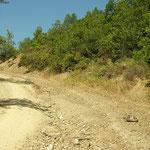 Griekse landschildpad (Testudo hermanni) steekt de weg over