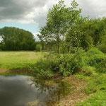 Habitat van boomkikker en bastaardkikker.