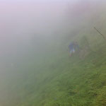 Wouter searching the steep slopes in the dense fog.