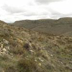 Habitat van Wipneusadder (Vipera latastei).