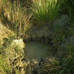 Painted Frog (Discoglossus pictus) habitat.