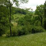 Prachtig dal, habitat van levendbarende hagedis.