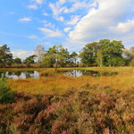 Beautiful fen on the Veluwe.