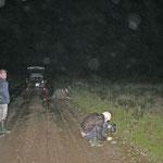 Donker + regen = veel amfibieën