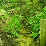 Habitat van o.a. vuursalamander en alpenwatersalamander.