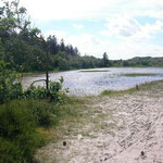Habitat van levendbarende hagedis en rugstreeppad.