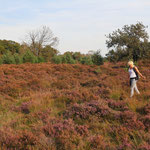 Laura searching the beautiful purple fields for more snakes.